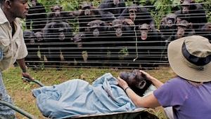 To zrobiły te zwierzęta sprawiło że się popłakałam. Bardzo wzruszające!