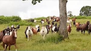 Udało się uratować aż 200 koni! Zobaczcie ich reakcję... Jest niezwykła!