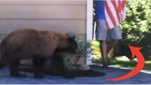 Kiedy niedźwiadek i ten mężczyzna spotkali się przez przypadek, zareagowali w za