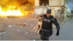 Policjant ryzykował swoim życiem, by uratować psa z pożaru!