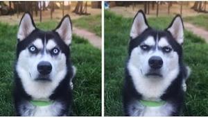 Właścicielce udało się uchwycić na zdjęciu moment, w którym jej pies zdał sobie