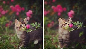 15 zdjęć zwierzaków zachwyconych... kwiatami. To poprawi Wam humor!