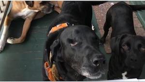 Ten pies był skazany na śmierć... Obcy mężczyzna zaryzykował i uratował go!