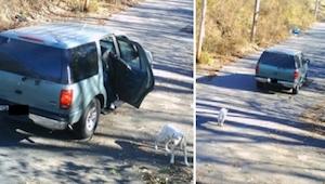 Wyrzucił z samochodu psa i odjechał... To co stało się później to prawdziwy cud!