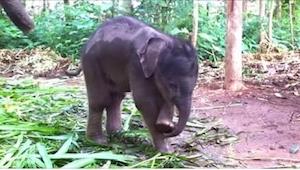 Najzabawniejsza na świecie reakcja słonia na widok własnej trąby! To Was ubawi :