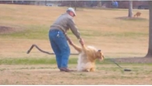 Przyłapał obcego mężczyznę w parku na robieniu TEGO swojemu psu. Zaczął kręcić c