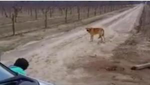 Ten pies chciał się dobrowolnie zagłodzić. Powód wzrusza do łez, bardzo gorzkich