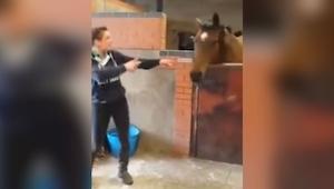 Zaczęła tańczyć w stajni. Reakcja tego konia jest cudowna!