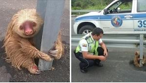 Jechał autostradą, gdy niespodziewanie zobaczył... leniwca. Zwierzę było przeraż