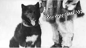 91 lat temu ten pies uratował całą miejscowość! Jak? To dopiero niesamowite!