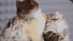 Nawet jeśli nie przepadasz za kotami ten film pokochasz. Obejrzyj a zrozumiesz d