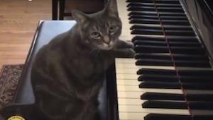 Posadzili kota przed pianinem a on zrobił coś co wszystkich zszokowało. Niesamow