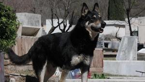 Po śmierci pana ten pies nagle znikł. Powód wzruszy każdego