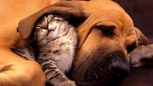 Zobacz 14 uroczych zdjęć pokazujących uroczą przyjaźń kotów i psów
