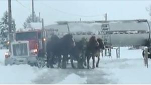 To, czego dokonały te cztery konie, robi wielkie wrażenie! Koniecznie zobaczcie