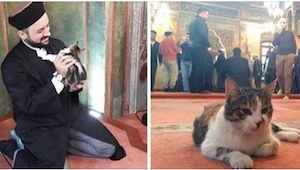Wpuścili bezpańskie koty do meczetu. Zobaczcie zdjęcia!