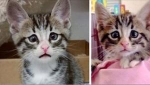 Poznajcie kota o najsmutniejszych oczach na świecie! Nawet ma swoją stronę w Int