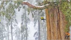 Pewien fotograf został poproszony o zrobienie zdjęć jednego z największych drzew