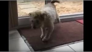 To, co robi ten pies, jest rewelacyjne! I wcale nie trzeba go o to prosić :)