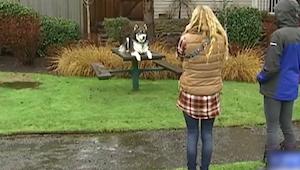 Jej chłopak ją bił. Jednak gdy jej Husky podrósł zrobił coś niesamowitego!
