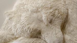 Wygląda jak śpiący niedźwiedź polarny, ale gdy dowiedziałam sie co to naprawdę j