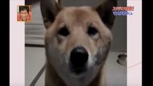 Nie będziesz w stanie opanować śmiechu gdy usłyszysz co zrobił ten pies