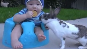 Gdy zobaczyłam co zrobił ten królik nie mogłam powstrzymać śmiechu. Biedny chłop