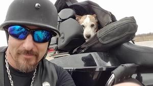 Sadysta katował psa na poboczu drogi, wtedy zjawił się pewien motocyklista
