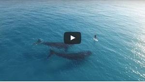 Zobaczcie, co się dzieje, gdy dwa wieloryby widzą na oceanie samotnego człowieka