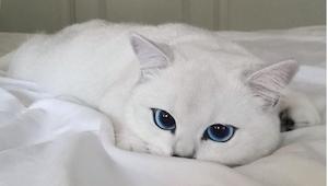Poznajcie kota o najpiękniejszych oczach na świecie! Można się w nich zakochać!!