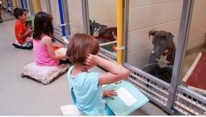Posadzili dzieci na podłodze w schronisku dla psów i dali im książki... Nie uwie