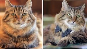 Poznajcie najstarszego kota na świecie! Nie uwierzycie, ile ma już lat!