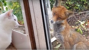 Dwa kotki stoją przy oknie, gdy niespodziewanie zbliżył się do nich ON! Niesamow
