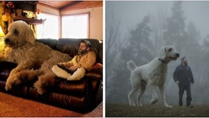 Ten fotograf przedstawia swojego psa w nietypowy sposób... Poznajcie psa - gigan