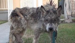 Weterynarz uratował psa przymierającego głodem. Tylko że... to nie do końca jest