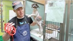 Wpadł na pomysł, jak sprawić,  by ludzie chętniej adoptowali starsze psy! Świetn