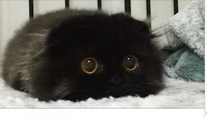 Gimo to kot o największych oczach, jakie kiedykolwiek widziałam! Tylko zobaczcie