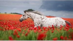 Zobaczcie 20 najpiękniejszych zdjęć koni! Nr 10 zachwyci każdego!