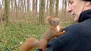 Wiewiórka weszła na ramię mężczyzny, ale zwróć uwagę na jej łapki..