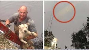 Ratownicy spieszyli się, żeby uratować pit bulla, gdy nagle za nim zobaczyli TO!