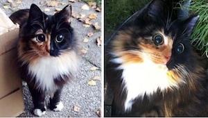 Uwierzycie, że ta kotka jest... niewidoma? Kto by pomyślał!