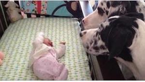 Co się stanie, gdy zostawi się niemowlaka z psem? Zobaczcie to na zdjęciach!
