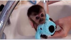 Zobaczcie pierwszą w życiu kąpiel małej małpki. Nawet na chwilę nie rozstała się