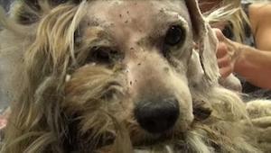 Bezpański pies przeszedł niesamowitą metamorfozę. Nie uwierzycie, jak wygląda te