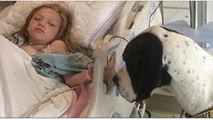Ten pies pieczołowicie dba o dziewczynkę. To, co go za to spotkało, jest niewiar