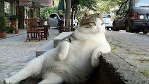 19 kotów, które mają własną wizję na to, jak się powinno siedzieć... Padniecie z