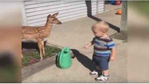 Nie sądziłam, że dzikie zwierzę zachowa się w TEN sposób na widok dziecka! Niesa