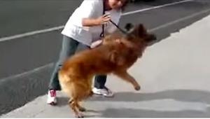 Ten pies nie miał innego wyboru, jak zostać na tej drodze i tam umrzeć... Nie sp