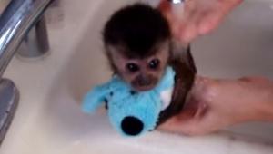 Zaczęła myć małpkę pod wodą, wtedy ta zrobiła coś uroczego!