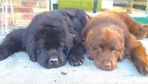 Wyglądają, jak dwa normalne psy, ale kiedy wstaną? Nieprawdopodobne!